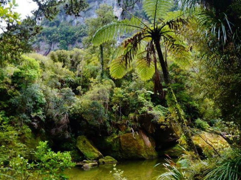Paparoa Nueva Zelanda