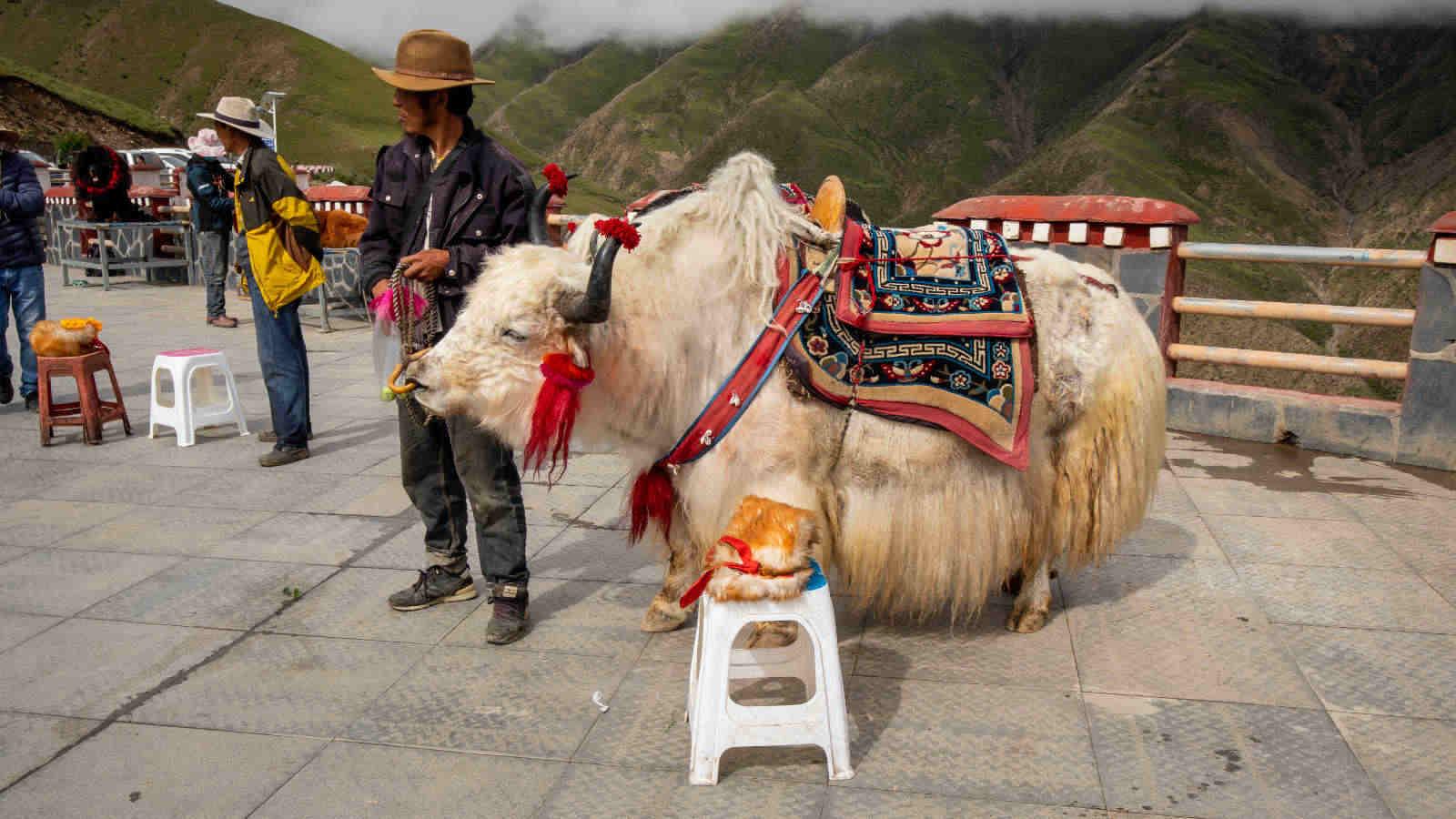 viaje al tibet