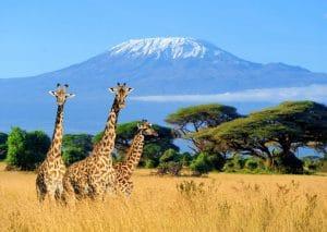 viajar al kilimanjaro subida