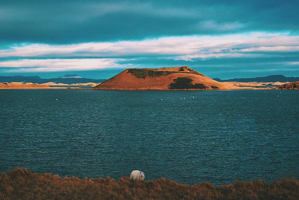 que ver en islandia en el lago Mývatn