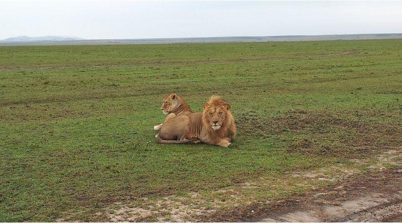 cambio-de-vida-leon