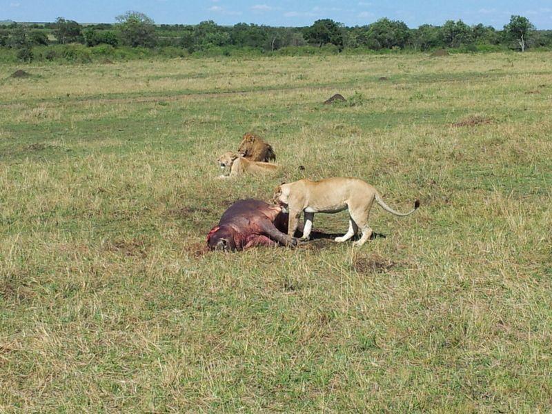 cambio-de-vida-leones